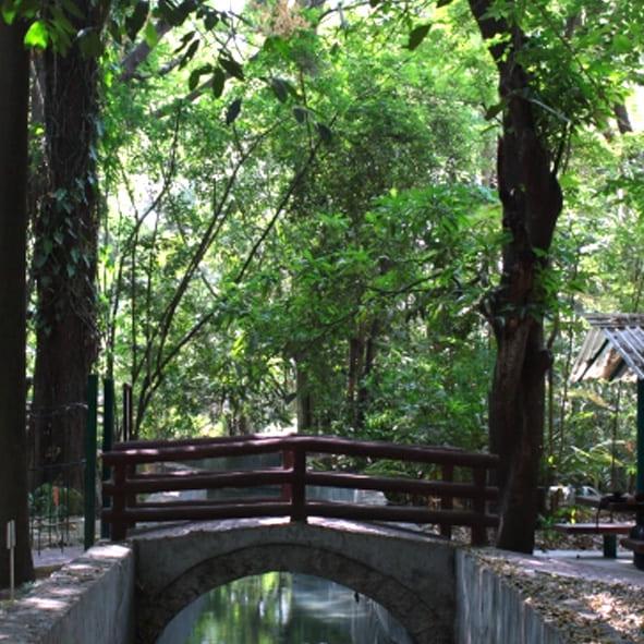 Parques recreativos en chiapas for Jardin botanico contacto