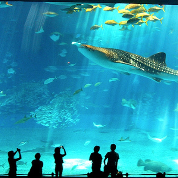 Visitar el acuario – CANCUN, PARQUES RECREATIVOS